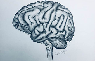 brain artwork